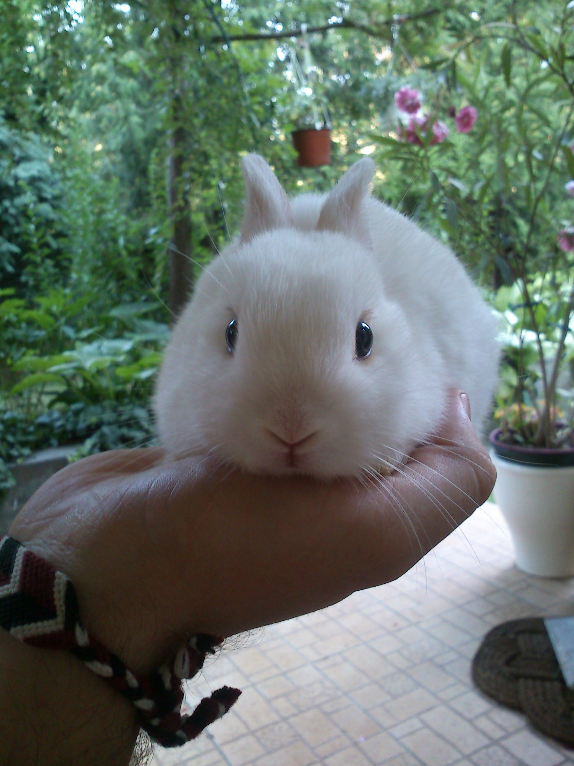 Little Bunny Fits in Owner's Hand Just Right