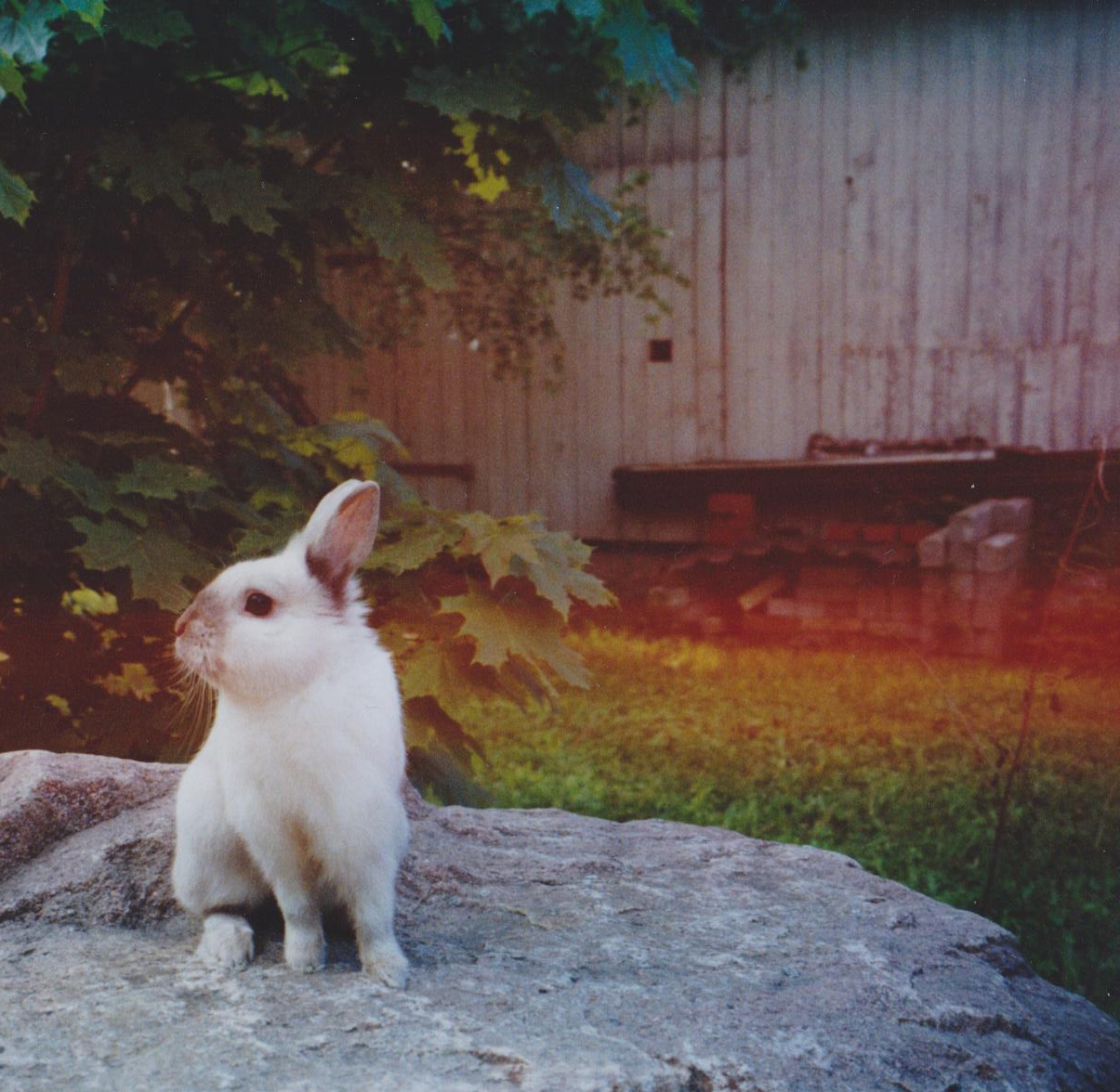 Bunny Surveys His Backyard Domain