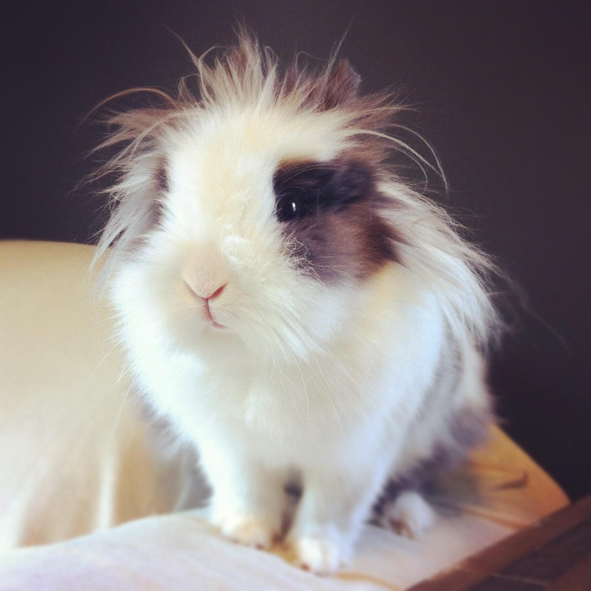 Bunny's Hair Icon Is Einstein