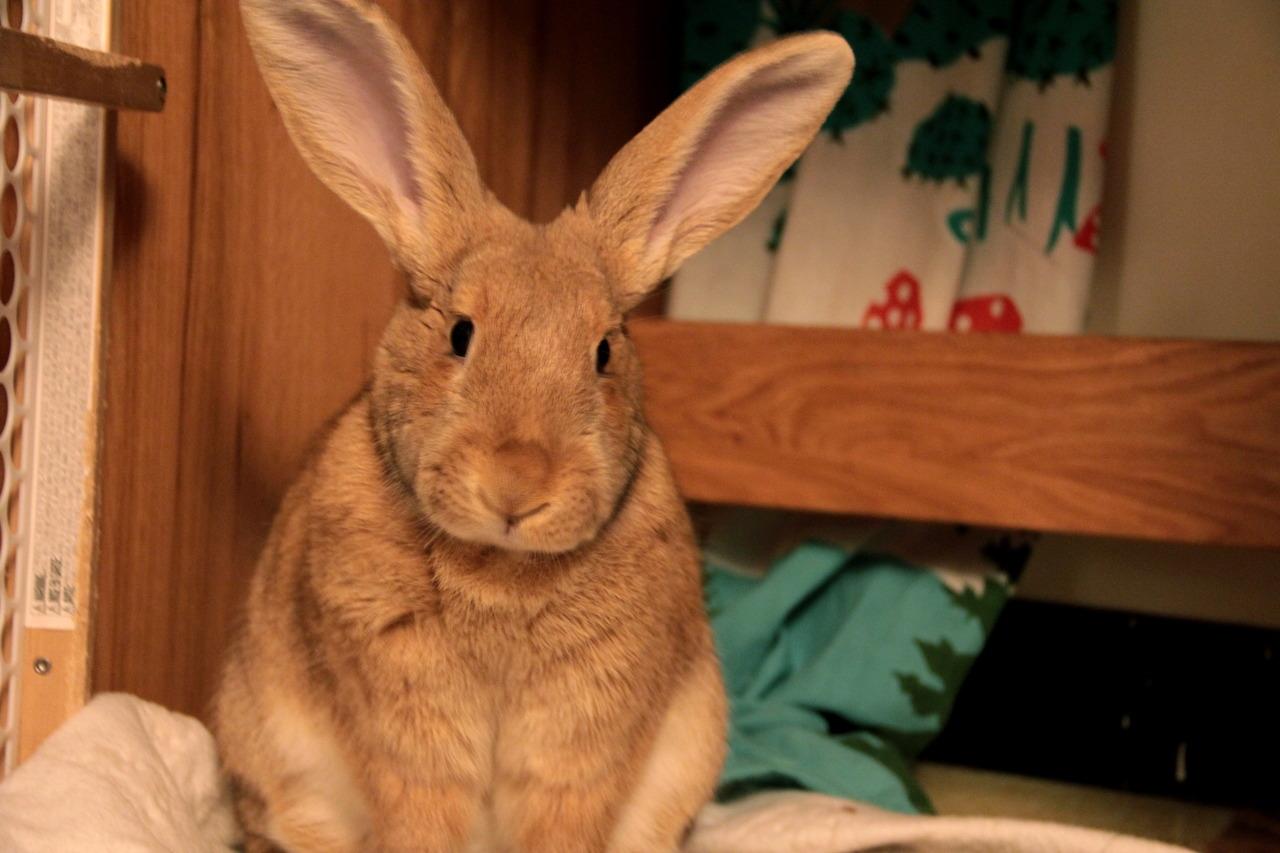 Bunny Looks Like a Real Velveteen Rabbit
