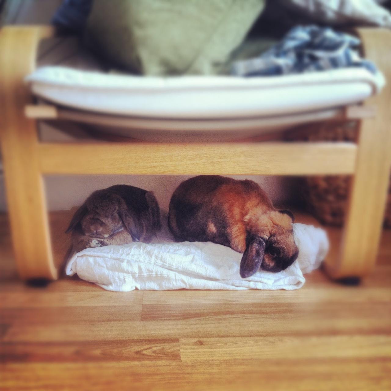 Hoomins Sit Up Top, Bunnies Below