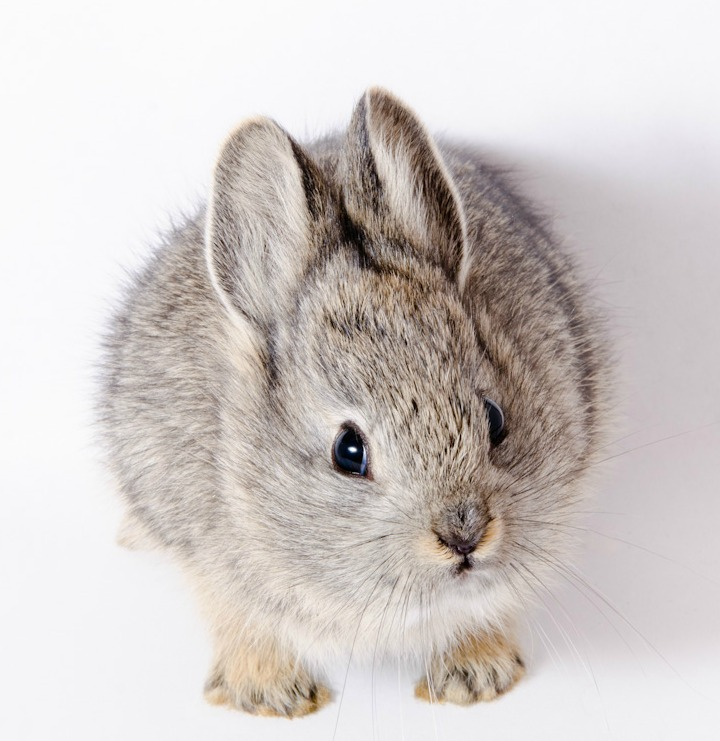 Oregon Zoo Releases Pygmy Rabbits into the Wild 1