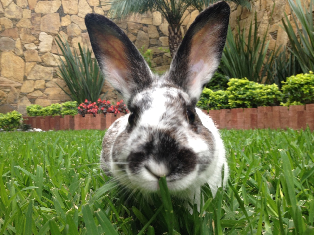 Curious Bunny Noses Up to the Camera
