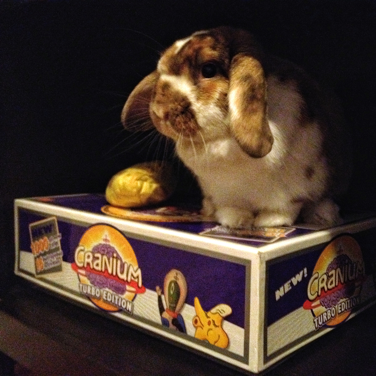 Bunny Wants to Play a Board Game. Any Takers?