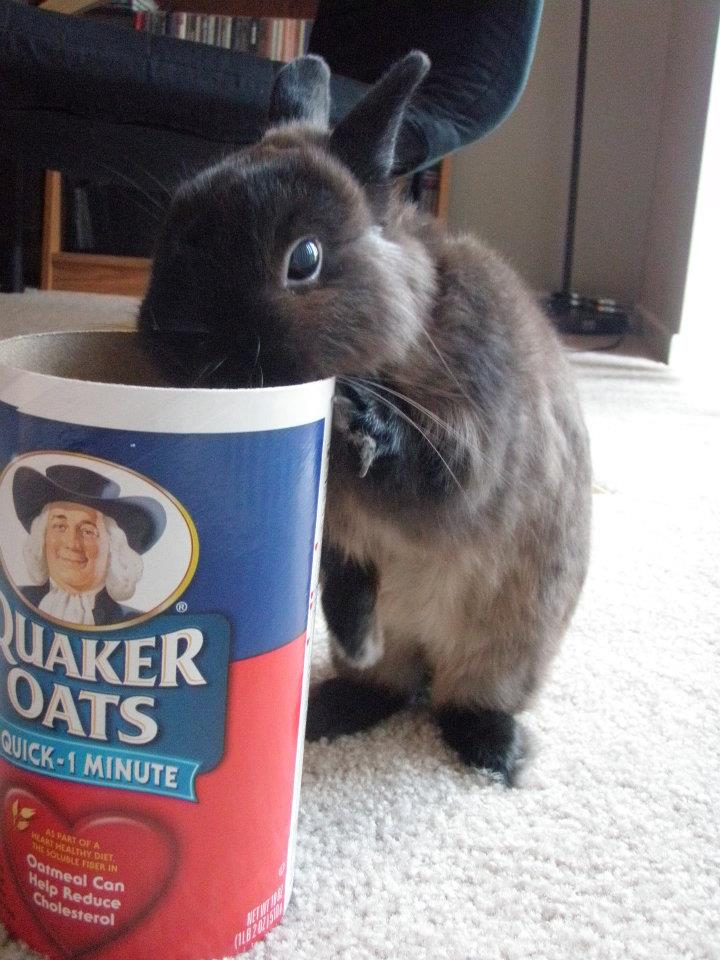 Bunny Tries to Sneak Some Oats, But Is Caught!