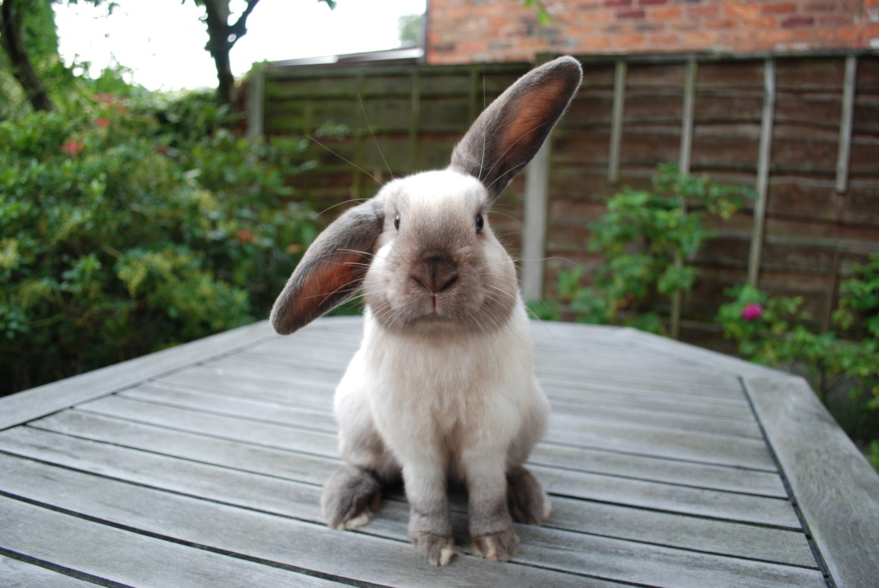 Bunny Is Only Half Listening