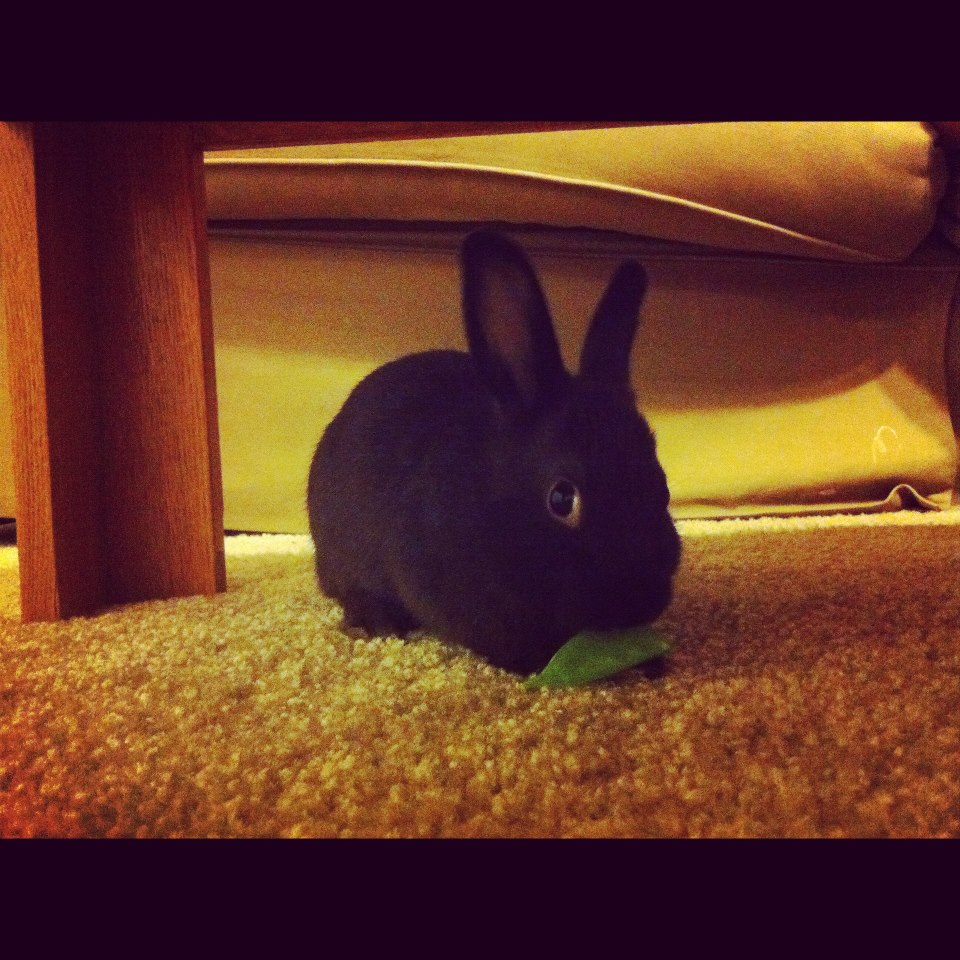Bunny Sneaks a Bite Under the Table