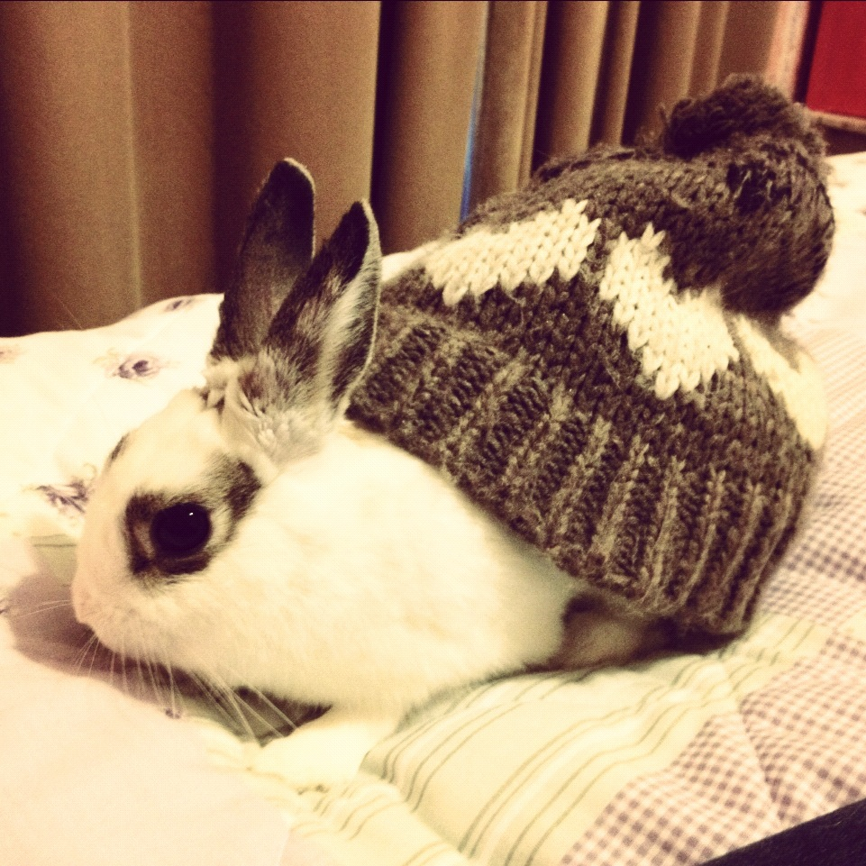 Bunny Wears a Hat on His Rump