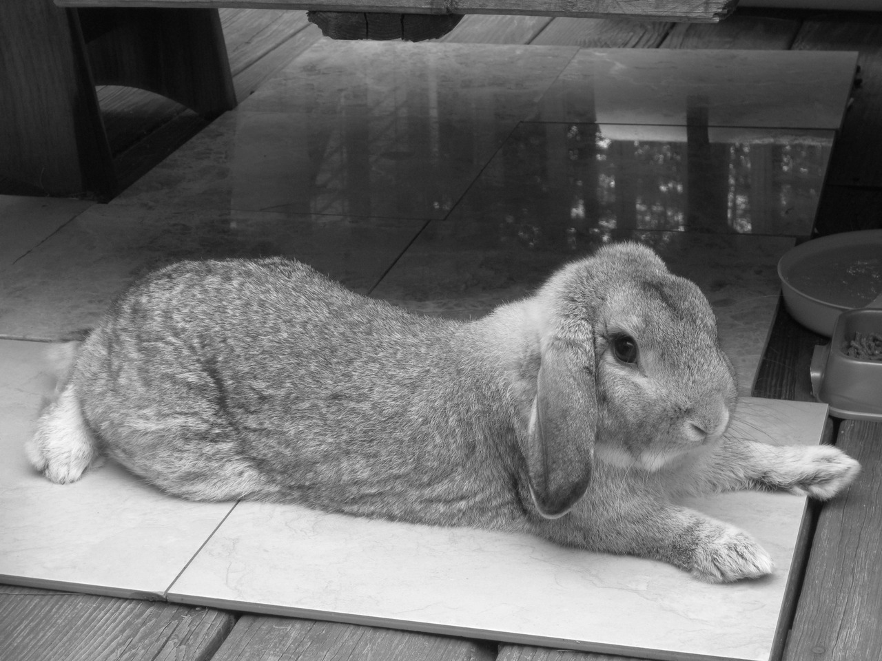Bunny Cools Down on Marble Tiles