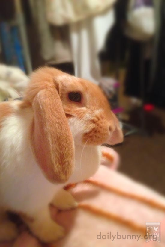 Bunny, You Look Pensive. What's on Your Mind?