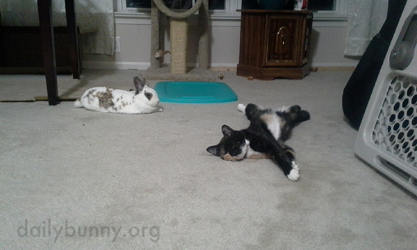 Bunny and Kitty Relax on the Floor