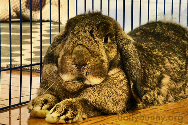 So, You Have Come to Sage Bunny for Advice? 1