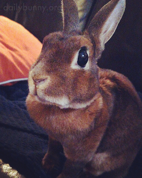 Bunny Is Telepathically Messaging Human for a Treat