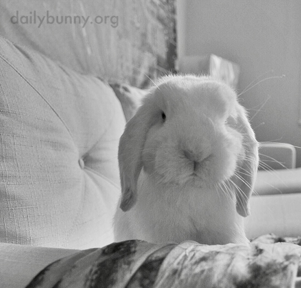 Bunny Will Stare You Down Until You Get Him Some Banana