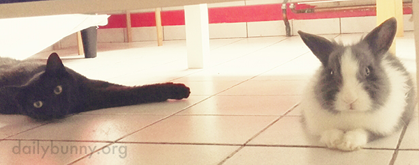Bunny and Kitty Stretch Out on the Cool Floor