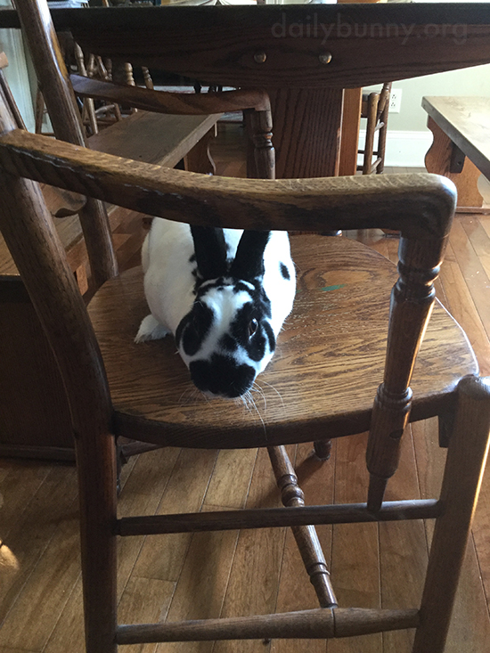 Bunny Waits for the Vegetable Platter to be Placed on the Table