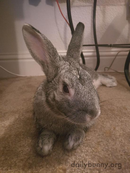 Bunny Is an Expert Lounger 1