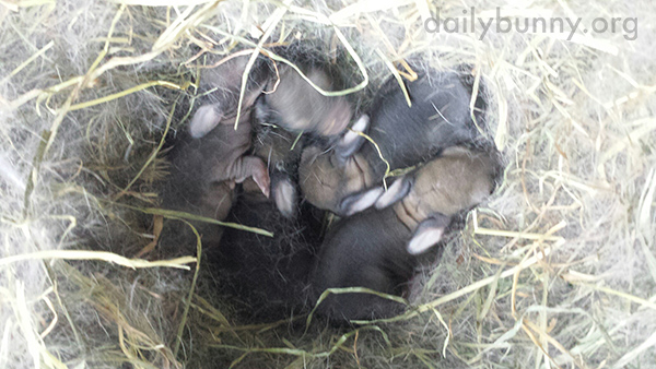 Bunny Surprises Caretakers with a Litter of Babies! 2