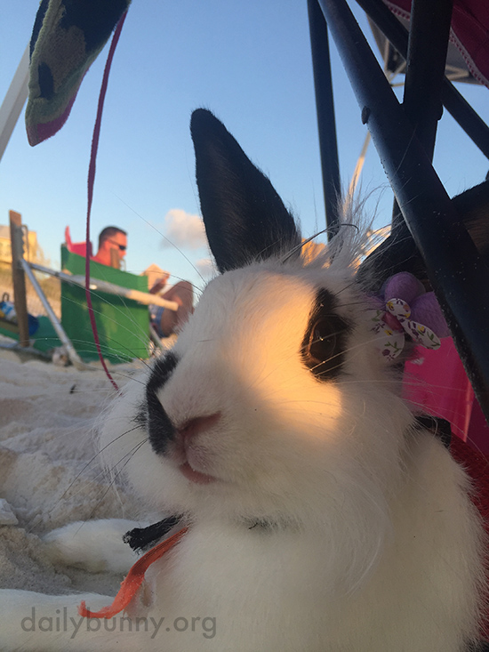 Bunny Takes a Break from Exploring and Digging in the Sand 1