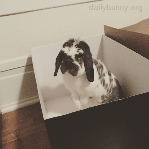 Okay, Human, I'm Ready for You to Fill This Box with Treats!