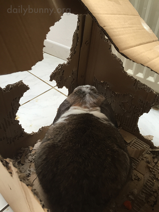 Bunny's Box Is Just the Way He Likes It, Okay?