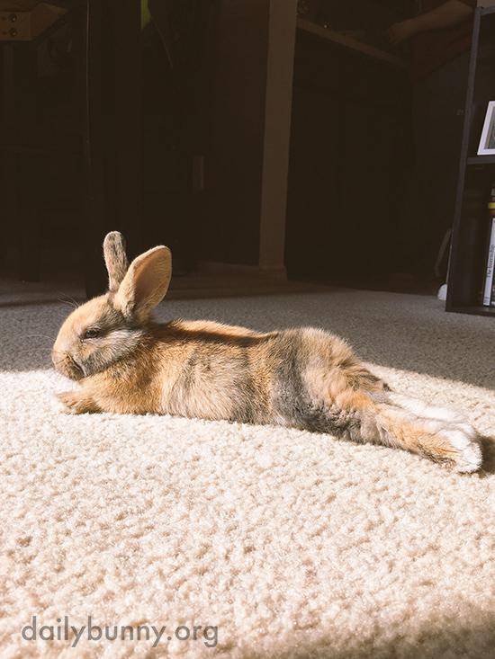Bunny Basks in a Sunbeam 3