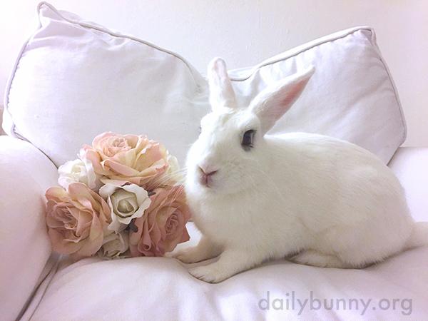A Bunny Makes a Cozy Scene Cozier