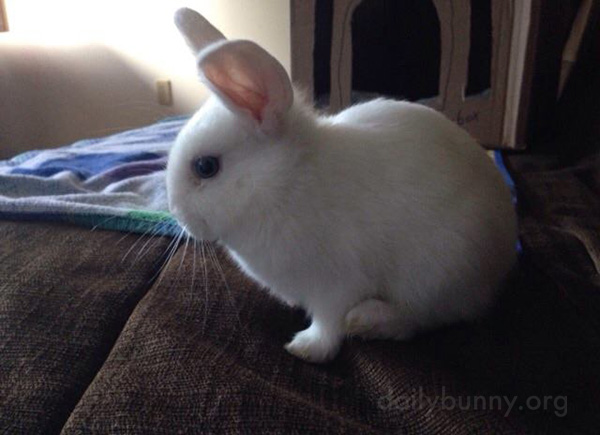 Bunny Makes Himself at Home on the Sofa 3