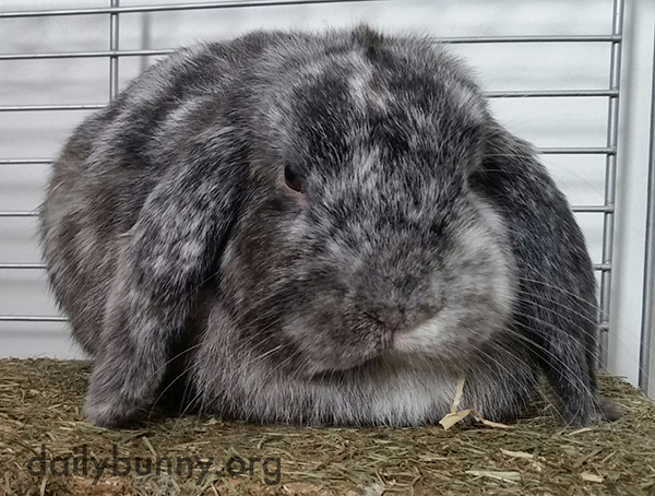 Don't Worry, Bunny Isn't as Grumpy as He Might Look