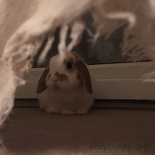 We Can See You, Bunny