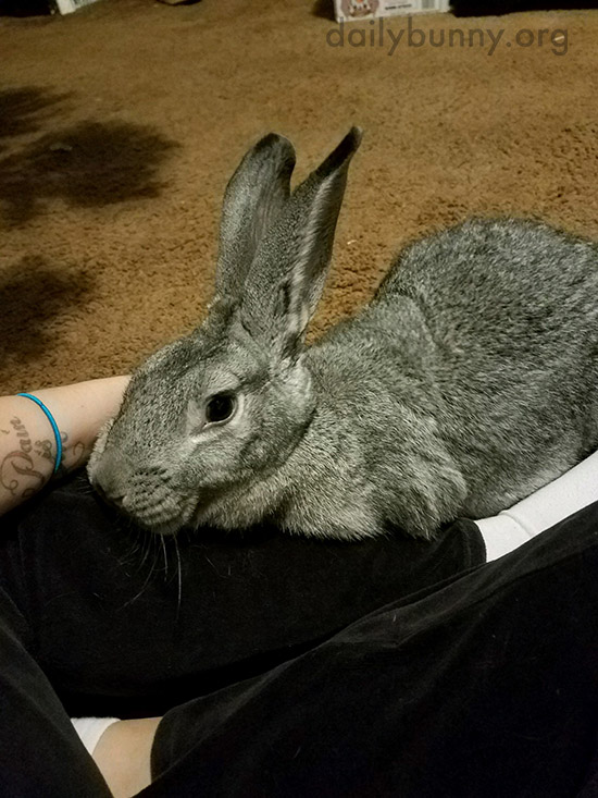 Bunny Comes to Human for Birthday Cuddles 2