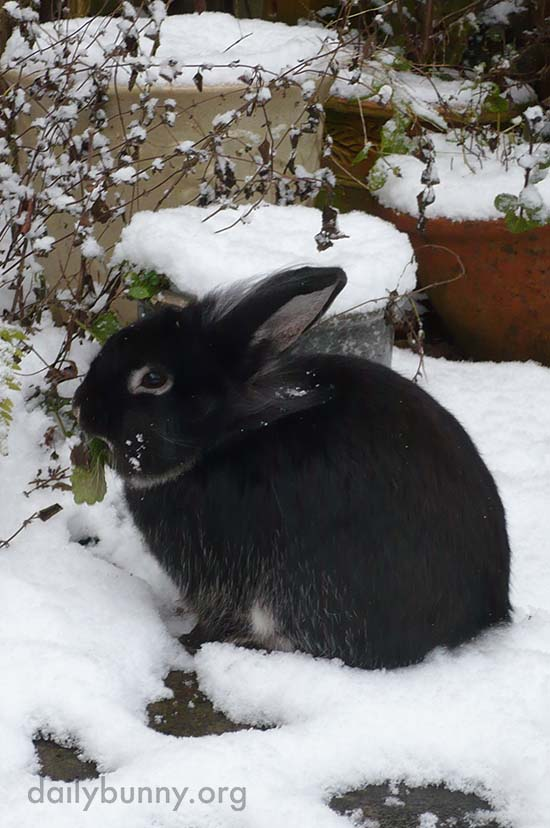 Bunny Can Always Find Something to Nibble, Even in the Snow