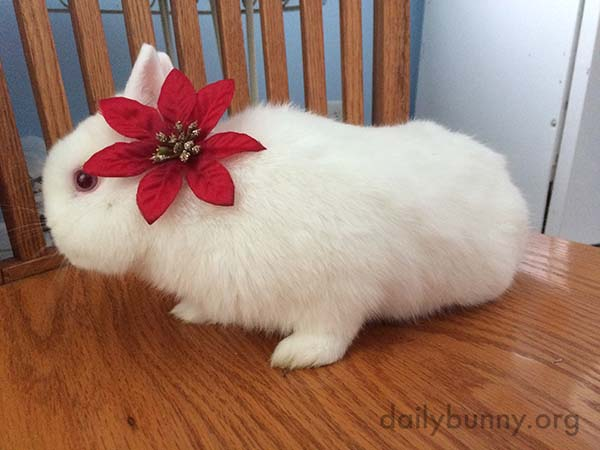 More Christmas Bunnies! 1