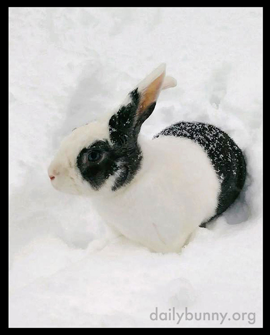 Bunny's Out for Some Digging in the Snow 1