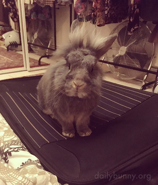 Did You Pack My Greens and Bananas, Human?