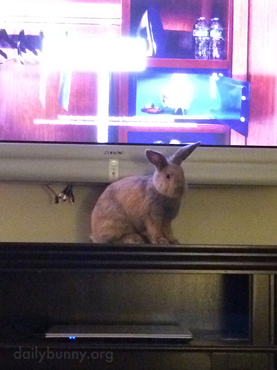 If I Sit in Front of the Television, Human Will Have to Focus on Me