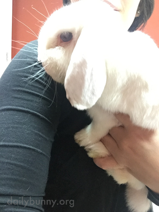 Bunny Takes a Human-Assisted Selfie