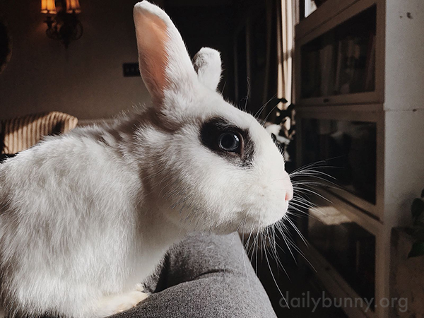 Bunny Is Watching Intently... Very Intently