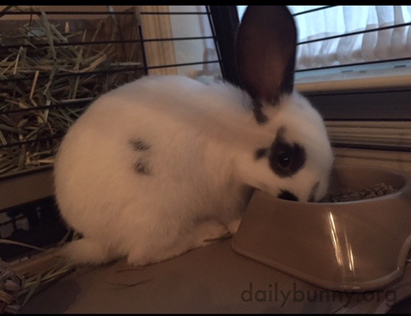 Bunny Will Eat Her Pellets But She's Keeping an Ear Out for Something More