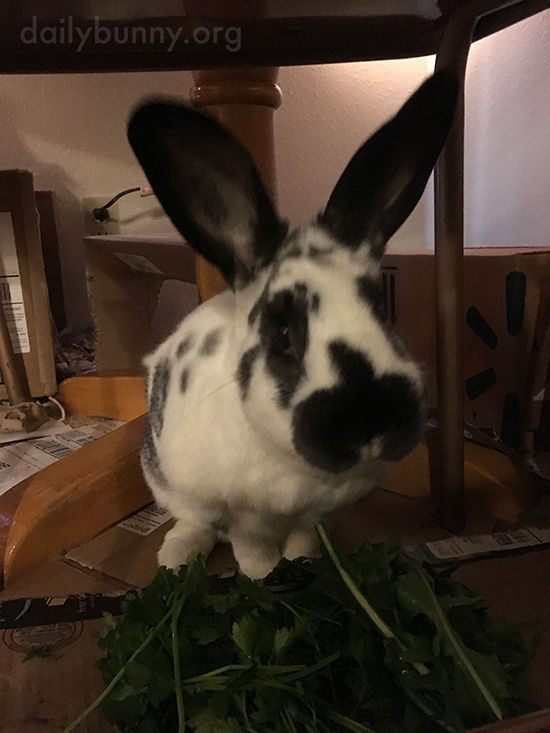 Don't Worry, Bunny Will Get Through That Whole Pile of Greens 2