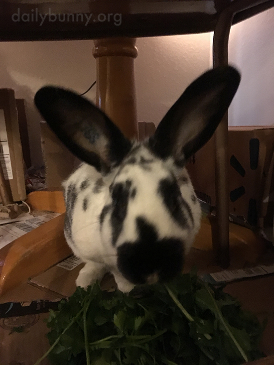 Don't Worry, Bunny Will Get Through That Whole Pile of Greens 3