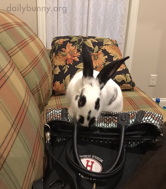 Bunny Checks Human's Bag for Anything Tasty Stashed Away 2