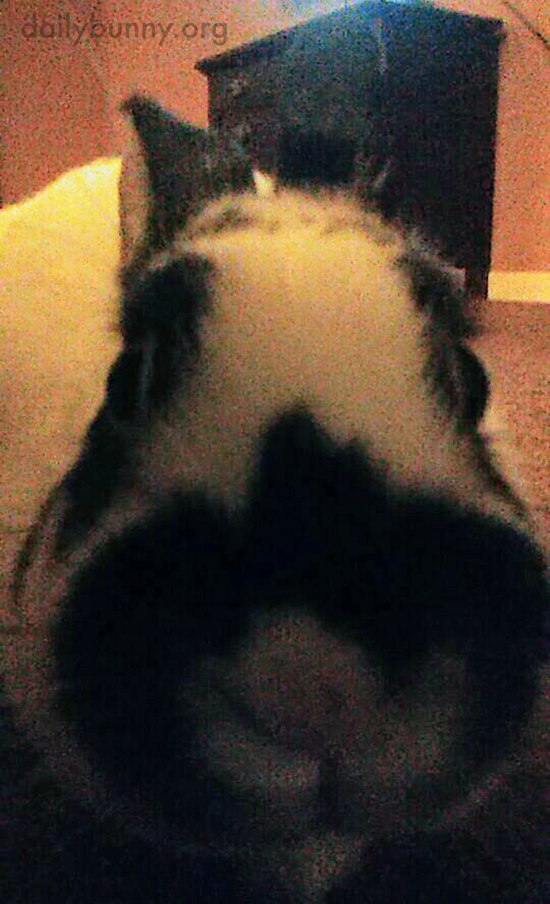 Bunny Noses Right Up to the Camera
