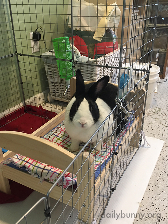 Bunny Sits on Her Neatly-Made Bed