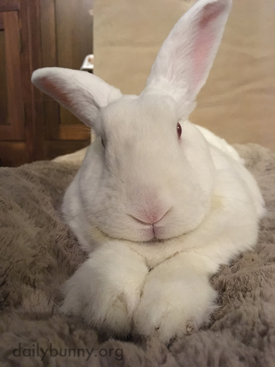Bunny Looks Like You Could Tell Him Anything and He'd Understand
