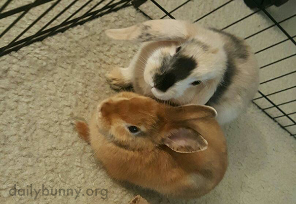 I Want to Reach Through the Screen and Give These Bunnies Head Scratches