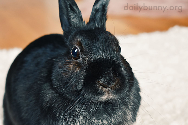 Bunny's Fur Looks Like It Could Be a Painting