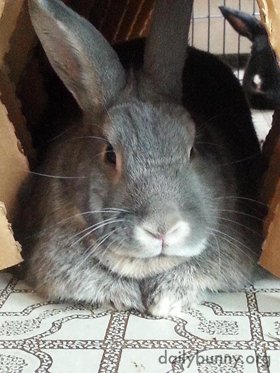 Bunny Has an Admirer