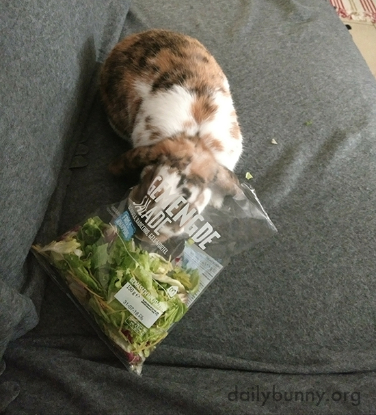 Bunny Is Making the Most of This Opportunity