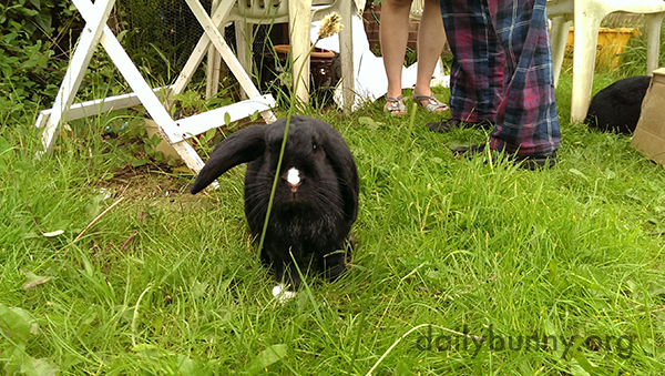 Is Bunny Going to Make a Move to Nibble That Big Stem?